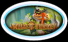 wild-turkey